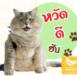 ผลงาน รับทำสติ๊กเกอร์ไลน์แมวพี่โบน